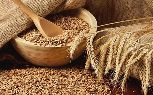 Пшенично зърно - сила на природата, преминала през вековете