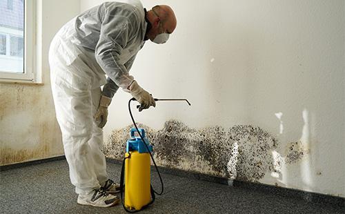 Ošetření stěn plísní