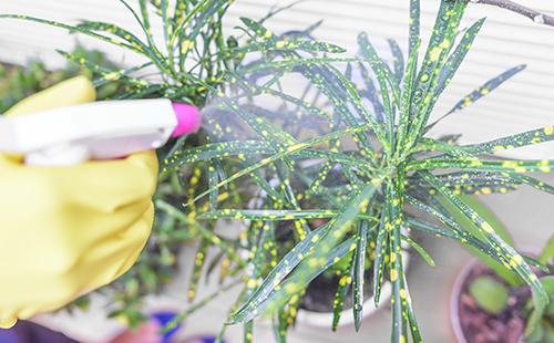 Postřikuje rostlinu