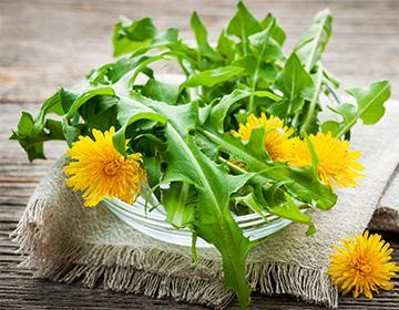 Voikukka lehdet ja kukat pöydällä