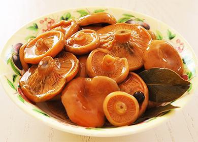 Solené houby šafránové v talíři